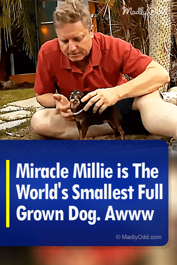8795-Pin-A-Miracle-Millie-is-The-World's-Smallest-Full ...